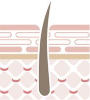 健康的な地肌と髪